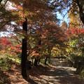 11月_国営昭和記念公園 2