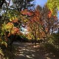 11月_国営昭和記念公園 4