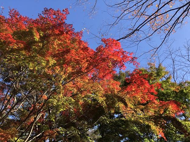 11月_国営昭和記念公園 3