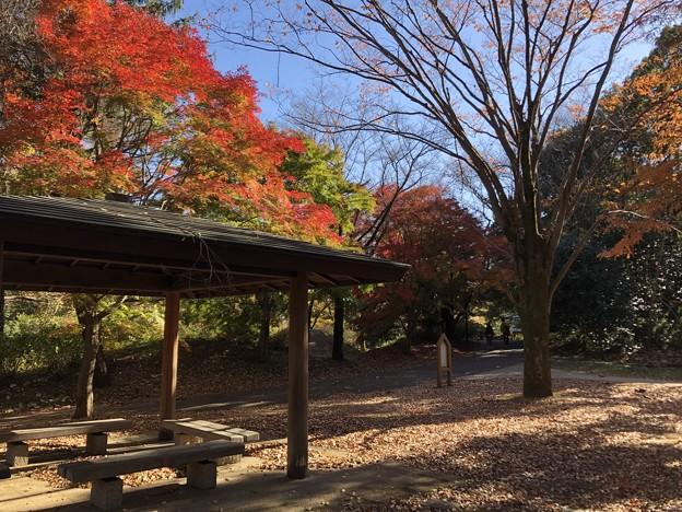 11月_国営昭和記念公園 g