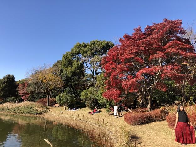11月_国営昭和記念公園 d
