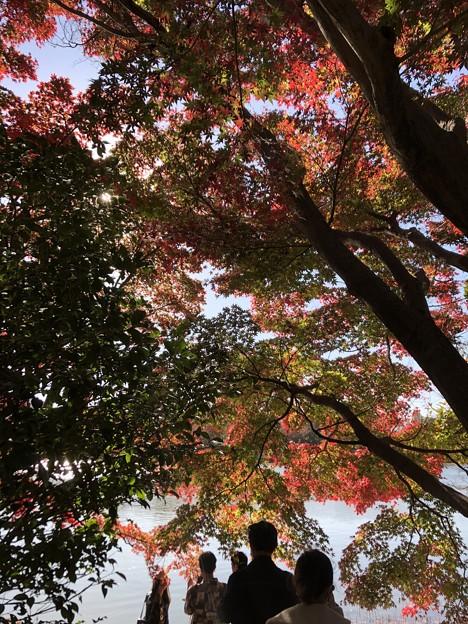 11月_国営昭和記念公園 k