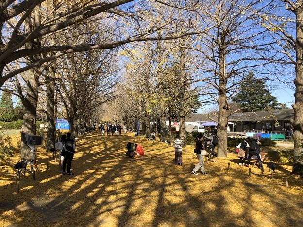 11月_国営昭和記念公園 7