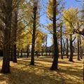 11月_昭和公園 1