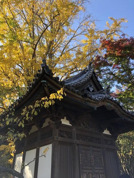 11月_三溪園 8