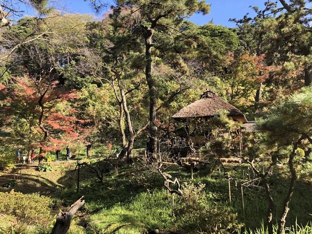 11月_三溪園 3