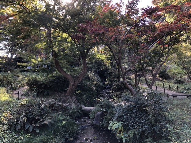 11月_三溪園 g