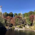 11月_目白庭園 4