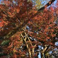 Photos: 12月_戸定が丘歴史公園 2