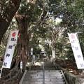 Photos: 12月_浅間神社 1