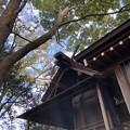 Photos: 12月_浅間神社 3
