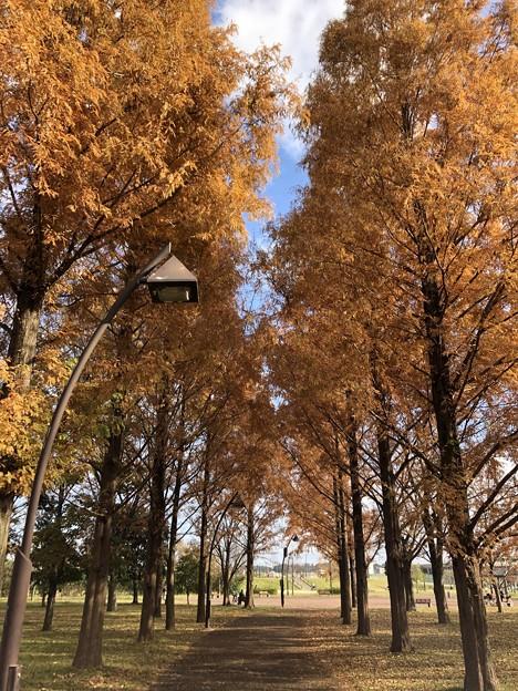 12月_水元公園 2