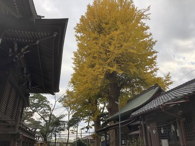 12月_御霊神社 3