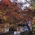 Photos: 12月_増上寺 7