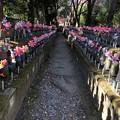 Photos: 12月_増上寺 8