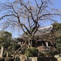 Photos: 1月_青柳寺 3