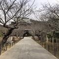 Photos: 2月_建長寺 1