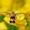 黄色い翅。