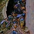 Photos: スズメのお宿。