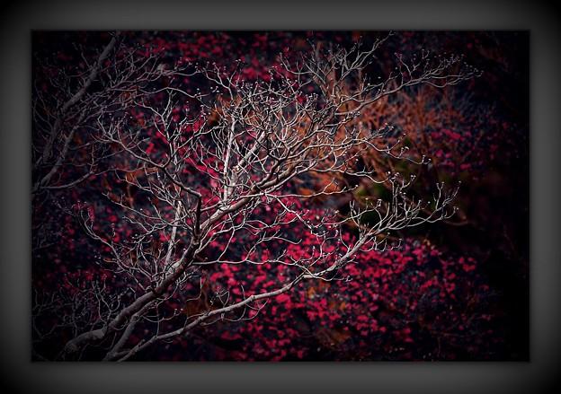 Photos: 晩秋額入り。