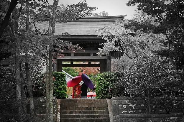 Photos: ともに歩む **