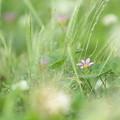 Photos: 夏草の庭