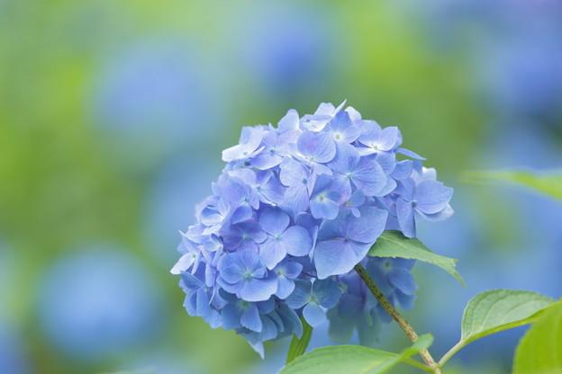 Photos: 夢旅人~Blue Dream