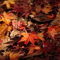 写真: 終い紅葉