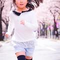 写真: 駆け抜ける桜道
