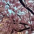 世界平和記念聖堂 sakura 広島市中区幟町 2018年3月25日