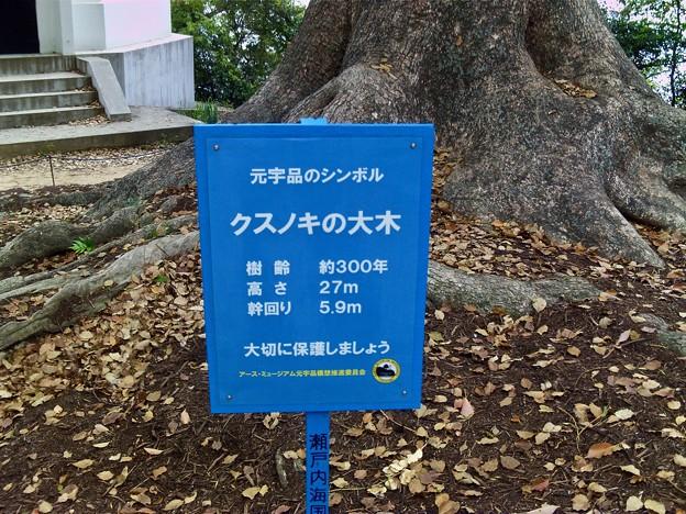 元宇品のシンボル クスノキの大木 広島市南区元宇品町 元宇品公園 2011年5月6日