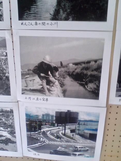 しののめ れんこんまつり 写真の展示 広島市南区東雲本町2丁目 東雲本町公園 2010年8月22日