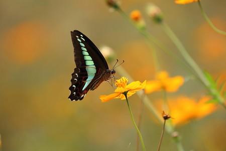 昆虫(17)ー花と蝶, 活発に