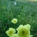 草原に咲いていた