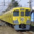 Photos: 黄色い丸い