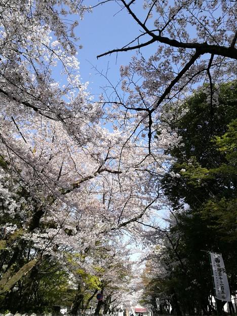 Photos: IMG_20180331_151451