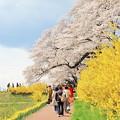 一目千本桜2