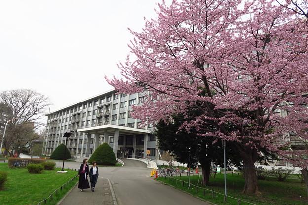 北海道大学その7
