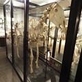 写真: 北大博物館その16