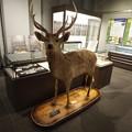 写真: 北大博物館その18