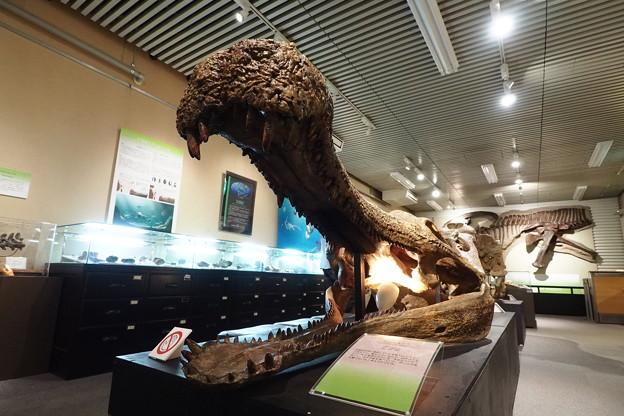 北大博物館その46