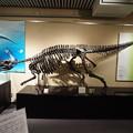 写真: 北大博物館その57