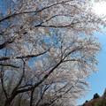 写真: 戸田記念墓地公園その2