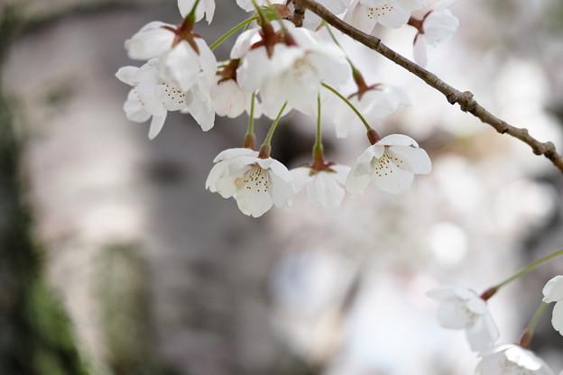 戸田記念墓地公園その11
