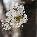 写真: 戸田記念墓地公園その17