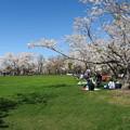写真: 戸田記念墓地公園その25