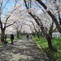 写真: 戸田記念墓地公園その29