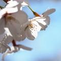 写真: 戸田記念墓地公園その33
