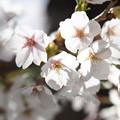Photos: 戸田記念墓地公園その36