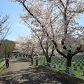 Photos: 戸田記念墓地公園その37